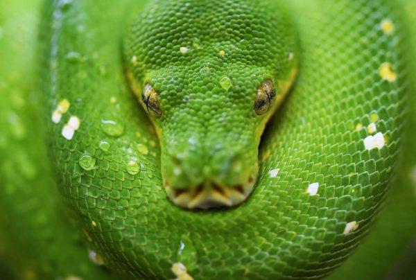 significado de los animales la serpiente
