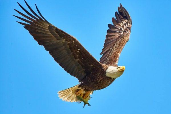 significado de los animales el águila