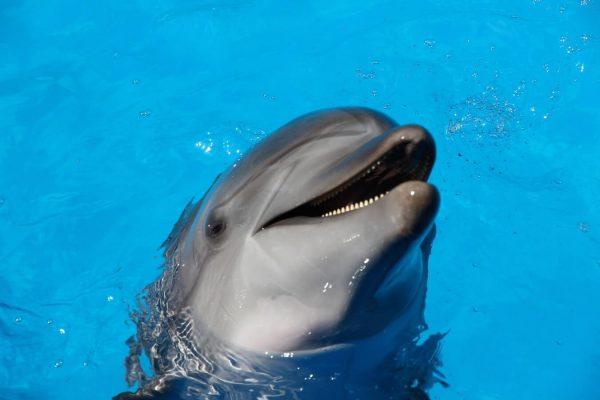 significado de los animales el delfín