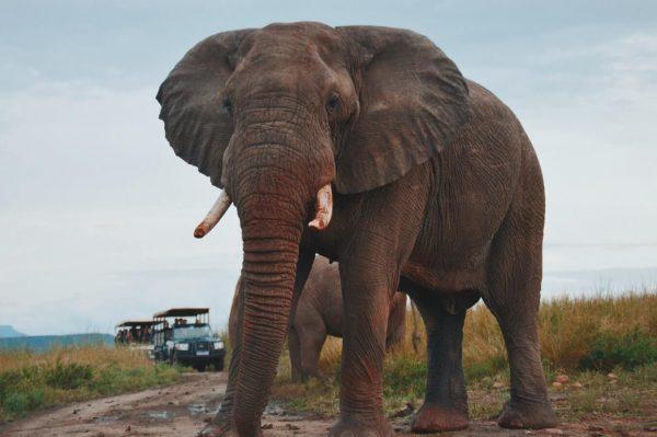 significado de los animales el elefante
