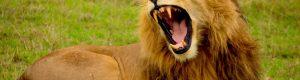 El significado de los animales ¿Qué animal eres tú?