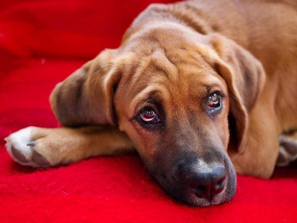 significado de los animales el perro