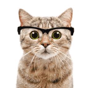 Gato_Test_Inteligencia